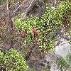 Juniperus2.jpg 1024 x 768 px 242.58 kB