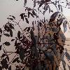 LeeaGuineensis2.jpg 1024 x 768 px 156.85 kB