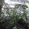 LepidozamiaHopei.jpg 720 x 960 px 443.87 kB