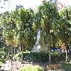 Livistona2.jpg 1110 x 833 px 291.06 kB