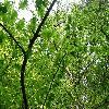 MetasequoiaGlyptostroboides7.jpg 1120 x 840 px 327.39 kB