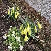 Narcissus6.jpg 1024 x 768 px 311.41 kB