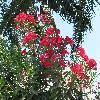 NeriumOleander21.jpg 1110 x 833 px 304.07 kB