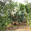 Opuntia10.jpg 1110 x 833 px 295.71 kB