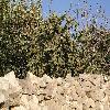 Opuntia11.jpg 1095 x 821 px 289.56 kB