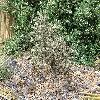 Opuntia12.jpg 1095 x 821 px 362.74 kB