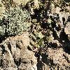 Opuntia14.jpg 1095 x 821 px 342.02 kB