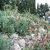 Opuntia32.jpg 1095 x 821 px 294.72 kB