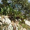 Opuntia36.jpg 1127 x 845 px 318.95 kB