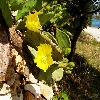 Opuntia40.jpg 1116 x 837 px 198.48 kB