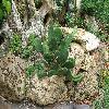 Opuntia4.jpg 1127 x 845 px 316.1 kB