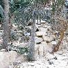 PachypodiumGeayi5.jpg 630 x 840 px 159.72 kB