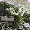 PachypodiumHorombense3.jpg 615 x 820 px 135.46 kB