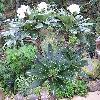 PachypodiumLamereiLamerei4.jpg 902 x 672 px 200.09 kB