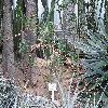 PachypodiumLealiiSaundersii2.jpg 1024 x 768 px 260.7 kB