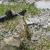 PachypodiumSaundersii9.jpg 615 x 820 px 193.8 kB