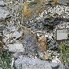 PachypodiumSucculentum8.jpg 1024 x 768 px 253.04 kB