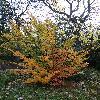 ParrotiaPersica8.jpg 720 x 960 px 543.83 kB