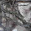 ParthenocissusQuinquefolia9.jpg 720 x 960 px 444.25 kB