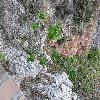 Pelargonium2.jpg 1086 x 815 px 305.28 kB