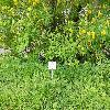 PetteriaRamentacea3.jpg 1208 x 906 px 455.31 kB