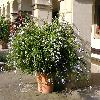 Petunia3.jpg 1024 x 768 px 213.31 kB