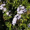 Petunia4.jpg 1024 x 768 px 149.76 kB