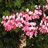 Petunia6.jpg 1024 x 768 px 172.79 kB