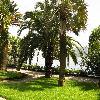 PhoenixCanariensis26.jpg 1110 x 833 px 285.94 kB