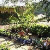 PhoenixCanariensis8.jpg 576 x 768 px 184.74 kB