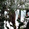 PhoenixRoebelenii6.jpg 1024 x 768 px 198.4 kB