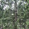 PiceaAbies4.jpg 1219 x 914 px 412.52 kB