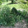 PiceaAbiesFormanek.jpg 1024 x 768 px 317.99 kB