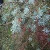 PiceaGlauca2.jpg 1024 x 768 px 257.59 kB