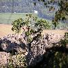 Pinus5.jpg 1024 x 768 px 211.17 kB