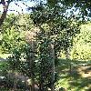 PinusSylvestrisPyramidalisGlauca2.jpg 576 x 768 px 181.14 kB