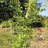 PlaneraAquatica.jpg 576 x 768 px 177.53 kB
