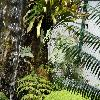 PolypodiumTriseriale.jpg 1024 x 768 px 277.77 kB