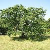 Prunus2.jpg 615 x 820 px 201.2 kB
