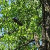 PrunusAvium2.jpg 1024 x 768 px 334.66 kB
