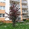 PrunusCerasifera9.jpg 638 x 850 px 140.38 kB