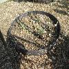 PseudognaphaliumLuteoalbum2.jpg 1167 x 875 px 315.42 kB