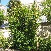 PunicaGranatum16.jpg 1110 x 833 px 375.39 kB