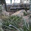 PuyaCoeruleaViolacea.jpg 681 x 908 px 396.23 kB