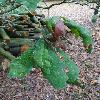 QuercusAlba5.jpg 720 x 960 px 362.17 kB
