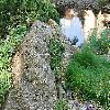 RamondaSerbica.jpg 1204 x 806 px 342.78 kB