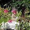 Rhipsalidopsis4.jpg 623 x 830 px 171.29 kB
