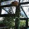 RhipsalisMicrantha.jpg 768 x 1024 px 201.02 kB