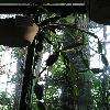 RhipsalisPachyptera2.jpg 576 x 768 px 110.19 kB