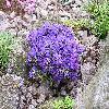 Rhododendron15.jpg 1024 x 768 px 294.5 kB